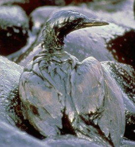 oil-covered-wildlife4